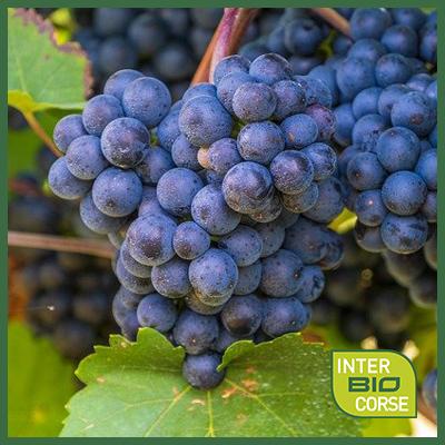 IBC-commande-viticulture