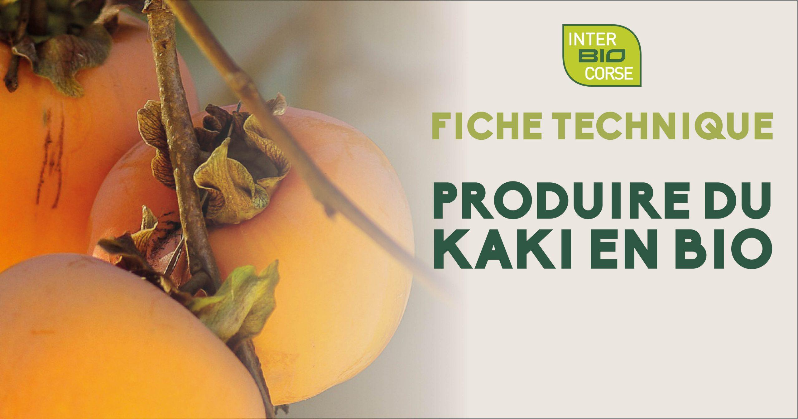Pour découvrir comment produire du Kaki en agriculture biologique, Inter Bio a réalisé une fiche technique regroupant toutes les informations à connaître.